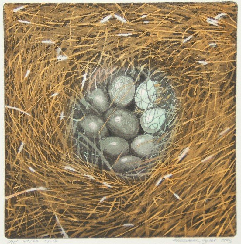 Nest - Taidegrafiikka