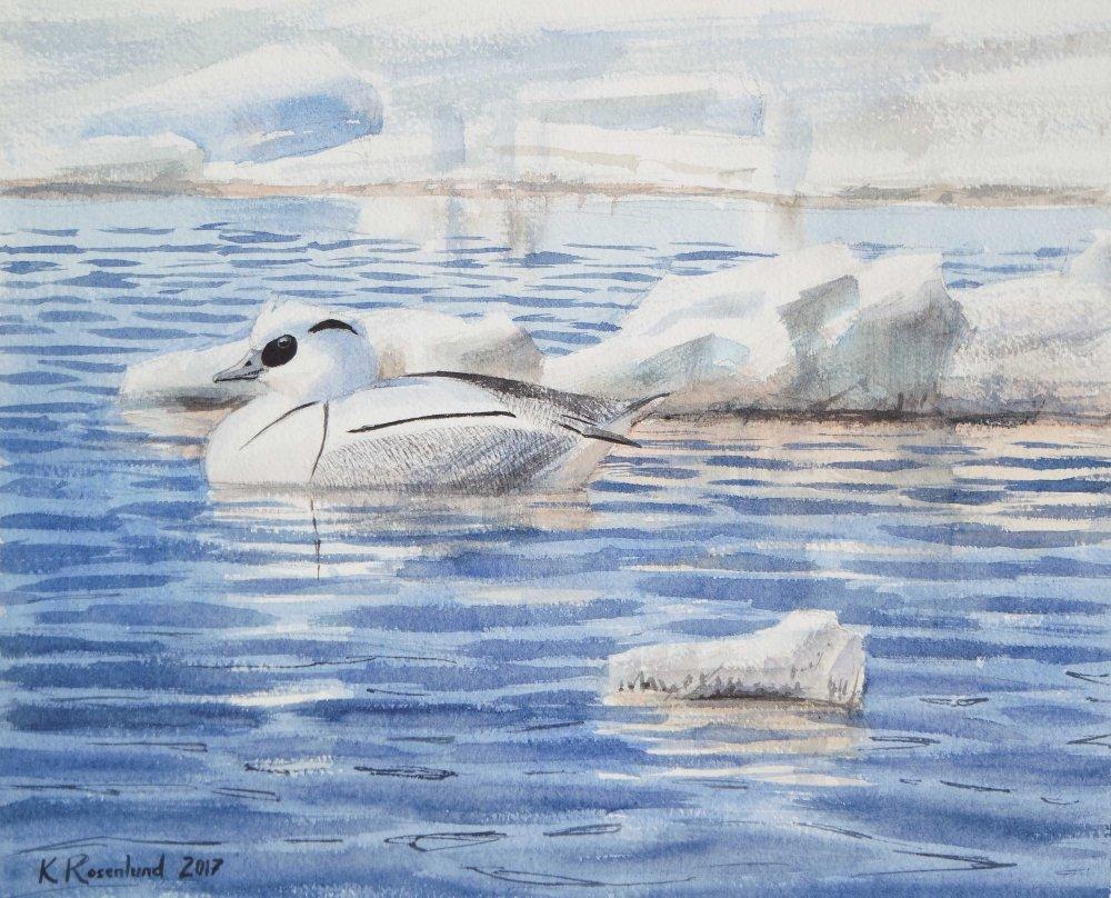 Uivelo ja ajojäätä(Harjukari Marinkainen) - akvarelli